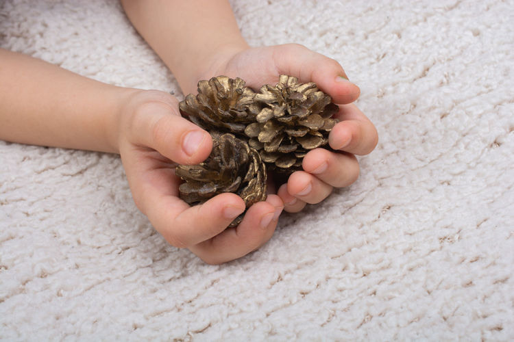 Arm Autumn Background Boy Caucasian Cheerful Childhood Children Clothing Cone Cones Decorate Effect Explore Fir Flora Forest Happiness Happy Hold Holding Holiday Kid Learn Leisure Life Lifestyle Little Male Man Mood Natural Nature Outdoors Pine Plant Play Season  Seed September Sweet Tender Tree Wood Young