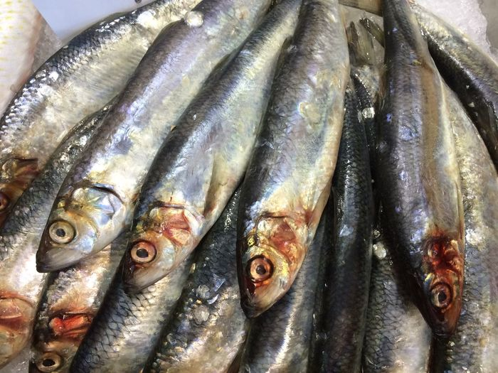 Fish Fish Monger Fish Stall Food For Sale Freshness Healthy Eating Market Stall Raw Raw Food Retail  Sale Sardines Seafood