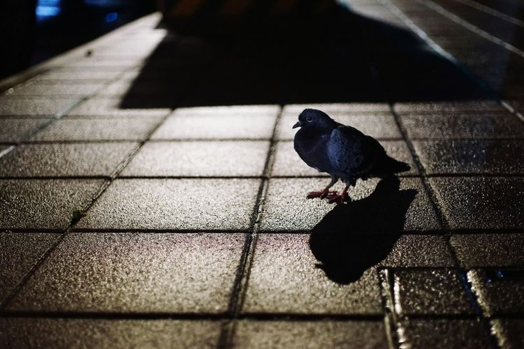 High angle view of bird perching on floor