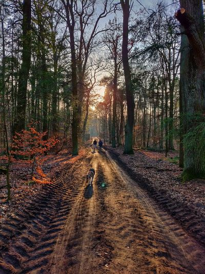 Man, woman and dog walking on footpath in forest