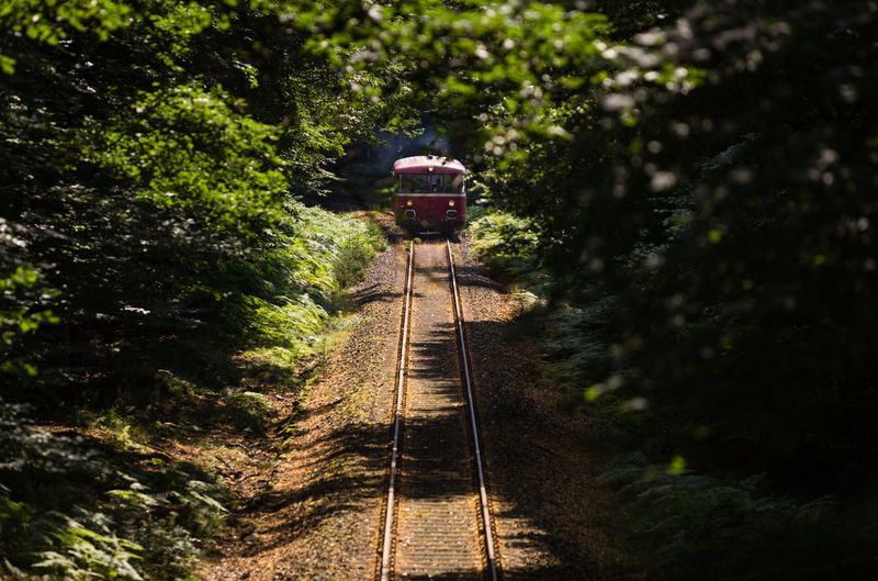 High angle view of train moving on railroad tracks amidst trees in forest