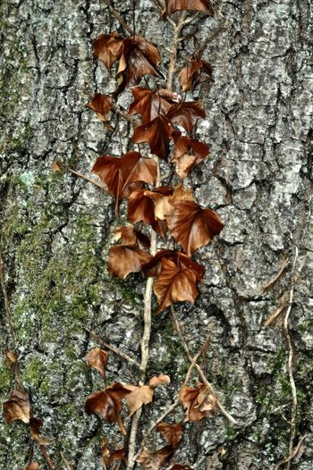Nature Autumn Leaves