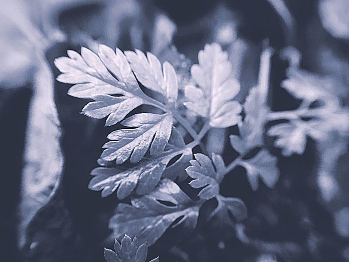EyeEm Selects Close-up Plant Selective Focus