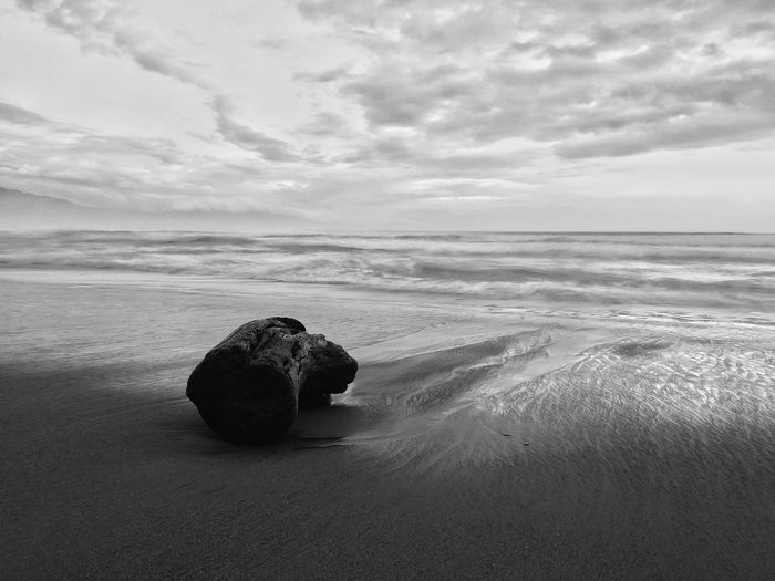 EyeEm Best Shots The Week on EyeEm Eyeem Philippines Sea Beach Sand Tree Trunk No People Black And White Tranquility Tranquil Scene Cloud - Sky Day Scenics Beauty In Nature Water Horizon Over Water