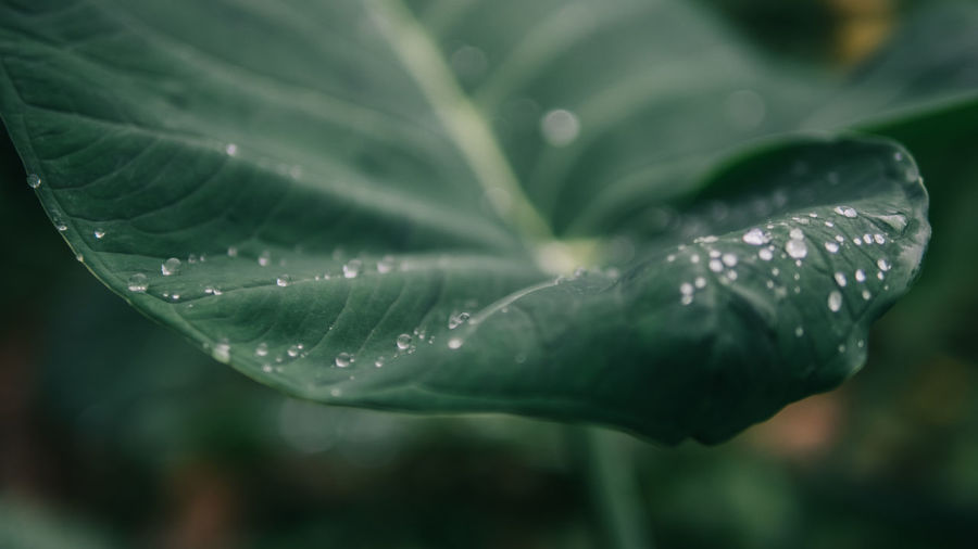 Beauty In Nature Close-up Day Dew Drop Droplet Fragility Freshness Green Color Growth Leaf Nature No People Outdoors Plant Purity Rain RainDrop Rainy Season Water Weather Wet