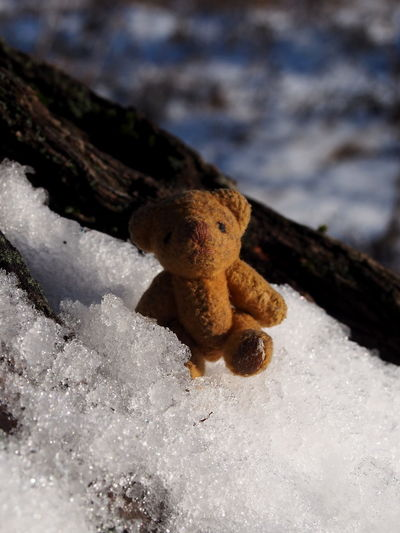 Close-up No People Nature Day Winter Toy Focus On Foreground Cold Temperature Snow Selective Focus Land Teddy Bear Outdoors Stuffed Toy Beauty In Nature Beach Representation Growth White Color