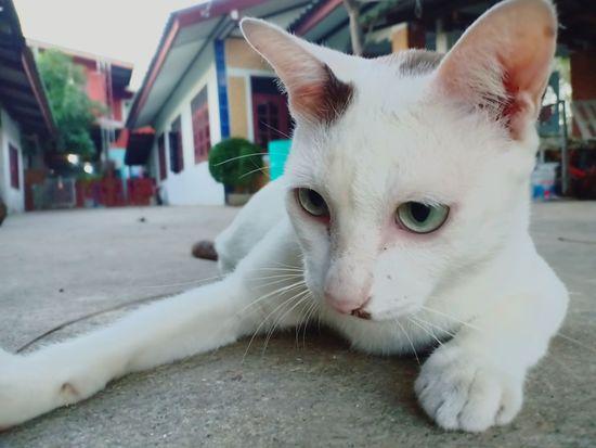 Cat♡ Lovelycat Pet Lovepet♥ Pets Water Domestic Cat Dog Feline Harbor First Eyeem Photo
