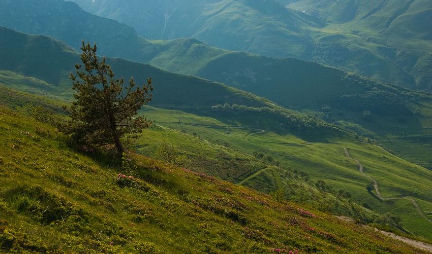 High angle view of tree on mountain steep
