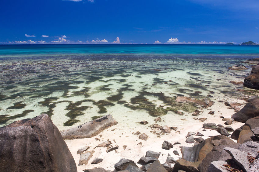 La Digue Anse Lazio Anse Source D'argent Beach Beauty In Nature Coastline Day Horizon Over Water Mahé Nature No People Outdoors Palm Praslin Seychelles Sand Scenics Sea Sky Tranquil Scene Tranquility Tropical Climate UnderSea Water