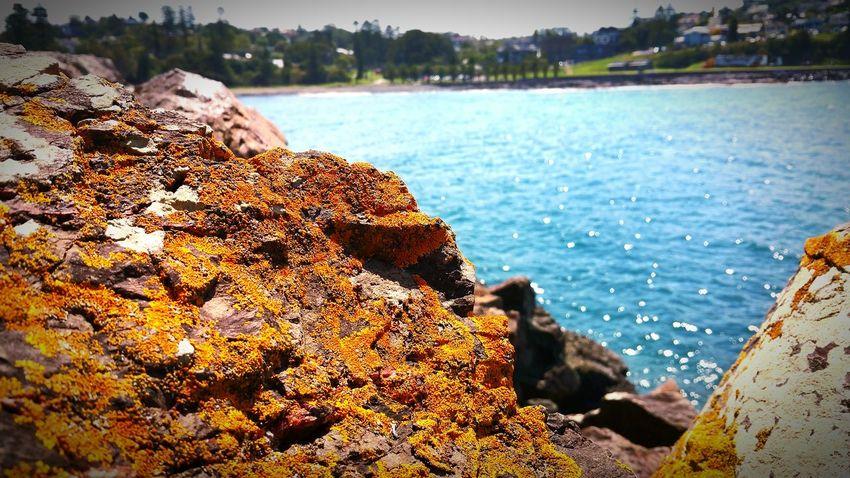 Mossy Stone Goldenrock Beautiful Nature Yellowmagic Yellow Moss Kiama  Australian Southcoast