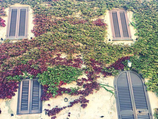 Plant Tree Green Color Nature Autumn Colors Borgo Medievale Castiglione Della Pescaia Italy Tuscany