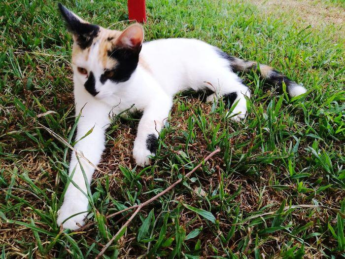 EyeEm Selects Pets High Angle View Domestic Cat Grass Feline Cat Stray Animal Kitten Tabby Tabby Cat Domestic Animals