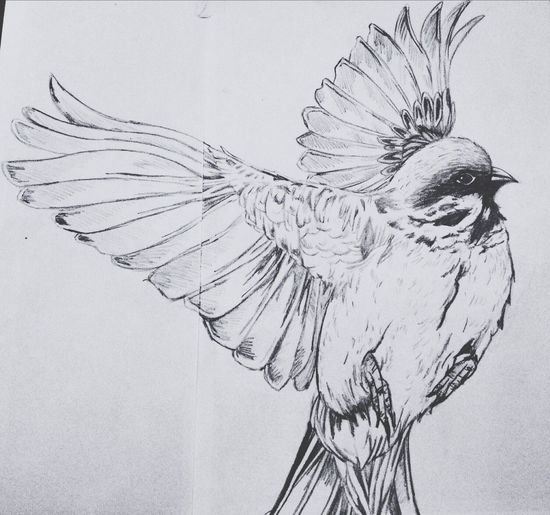 Drawing Bird Flying