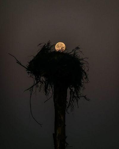 OnTop Moon Nest Cuckoosegg Kuckucksei