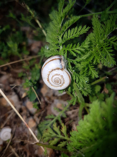 Animal Themes Animals In The Wild Close-up Day Fern Focus On Foreground Fragility Gastropod Green Color High Angle View Leaf Macro Macro Beauty Nature No People One Animal Outdoors Plant Snail Spiral Wildlife