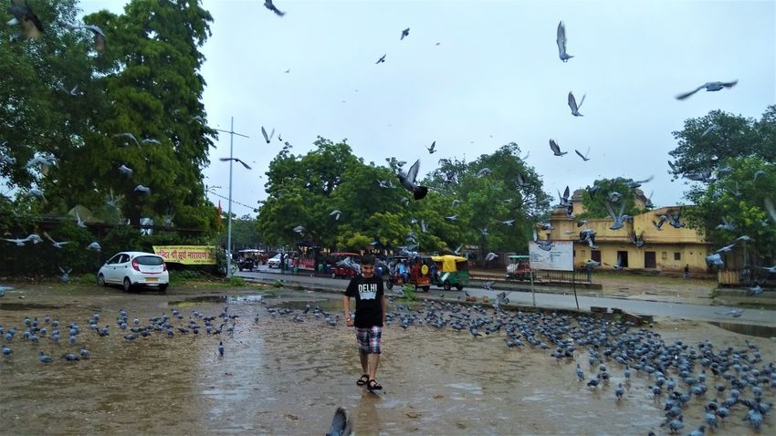 Water Wet Flood Flying Large Group Of Animals Flock Of Birds Only Men Torrential Rain Bird One Man Only Extreme Weather Accidents And Disasters People Sky Adult Animal Themes Police Force Outdoors One Person Adults Only EyeEm Selects Breathing Space Pegion Happiness