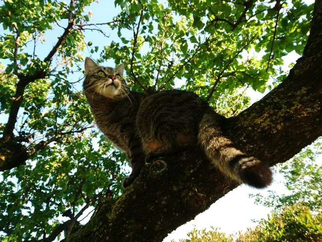 Tree One Animal Low Angle View Mammal Animal Themes Branch Outdoors Day Nature Animal Wildlife No People Animals In The Wild Sky Domestic Animals Pet Portraits