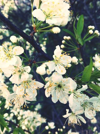 Spring Blossom Nature_collection EyeEm Nature Lover