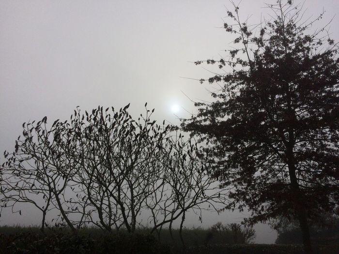 Misty morning trees pale sun