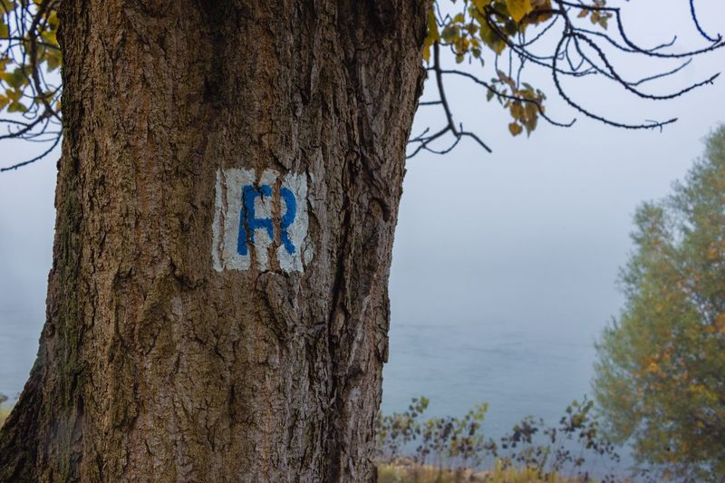 EyeEm Selects Tree Tree Trunk Day Nature Outdoors Communication Branch Blue No People Bare Tree Beauty In Nature Sky Letter Letter R