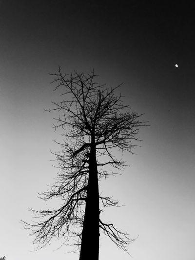 Nigh moon