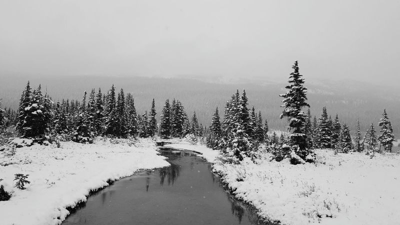 Nature Tree Water Beauty In Nature Scenics No People Lake Outdoors Tranquility Day Sky Snow Winter Evergreen Trees Stream Black & White Black And White Old Time