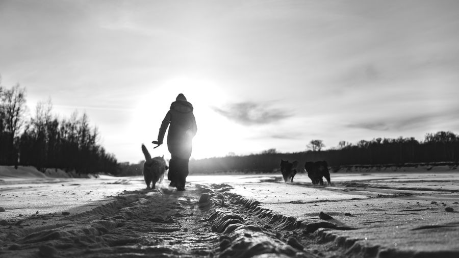 Man with animals walking on snowy land against sky
