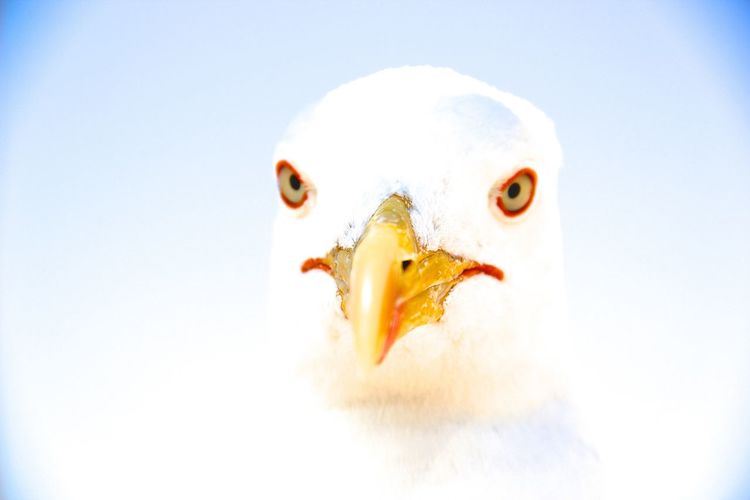 Close-up of white seagull against sky