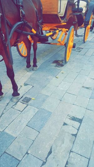 Horse Carriage Horse Carriage Wheels Animal Themes Carriage Ride Day Horse Low Section Outdoors Transportation