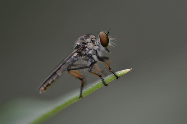 Close-up of fly on leaf against black background