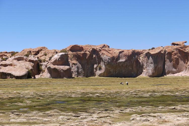 Black lagoon, Bolivia Bolivia Marsh Lagoon Black Lagoon Wildlife Cliffs Rocks Bog
