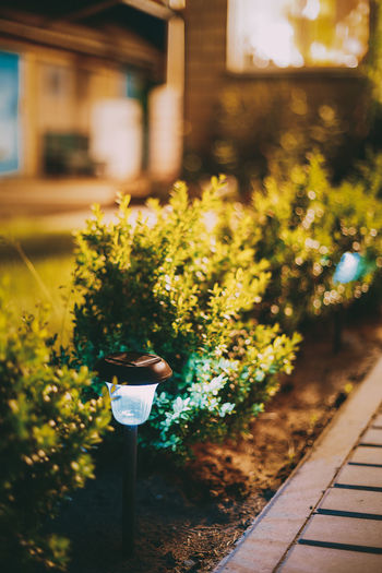 Night View Of Flowerbed With Violas Illuminated By Energy-Saving Solar Powered Lanterns Along The Path Causeway On Courtyard Going To The House Design Energy Evening Flowerbed Garden Green Illuminated Lamp Lantern Light Night Power Solar Solar Powered Summer Energy-saving