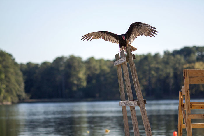 Suspicious Lifeguard Animal Animal Themes Animal Wildlife Animals In The Wild Bird Day Flying Focus On Foreground Lake Nature No People One Animal Outdoors Plant Post Spread Wings Tree Vertebrate Water Wood - Material Wooden Post