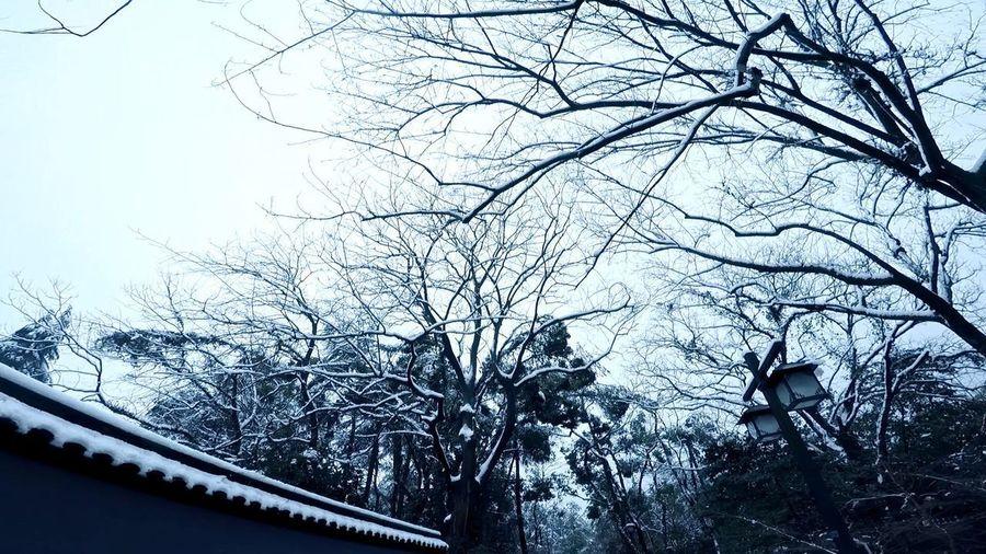 Snow day Tree
