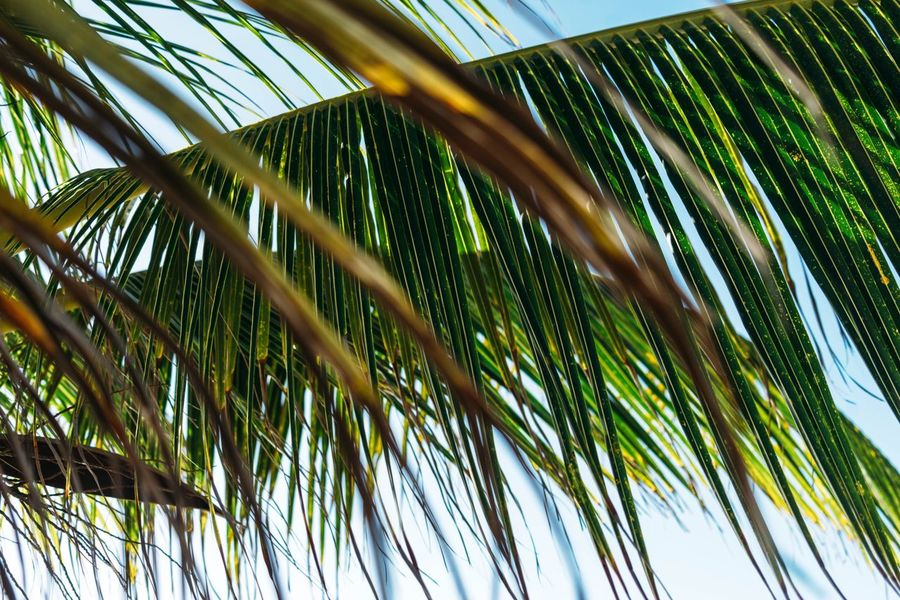 Palm Leaf Palm Tree No People Leaf Green Color Nature Close-up Tree Outdoors Sky Day