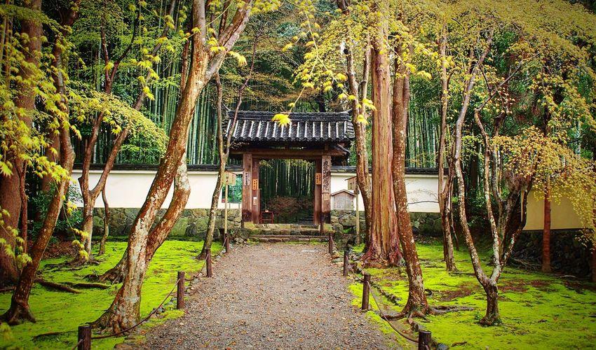 竹の寺地蔵院 地蔵院 京都 Kyoto Kyoto, Japan Kyoto Garden Japanese Garden Beauty In Nature Entrance 3XSPUnity Enjoying Life Hello World Relaxing Travel Destinations