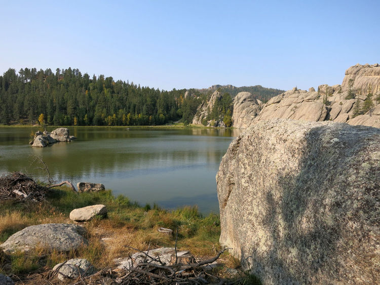 Beautiful and serene Sylvan Lake in Custer State Park in South Dakota Sylvan Lake Custer State Park Animal Themes Beauty In Nature Clear Sky Day Forest Grass Lake Landscape Mountain Nature No People Outdoors Rock - Object Scenics Sky Tranquil Scene Tranquility Tree Water