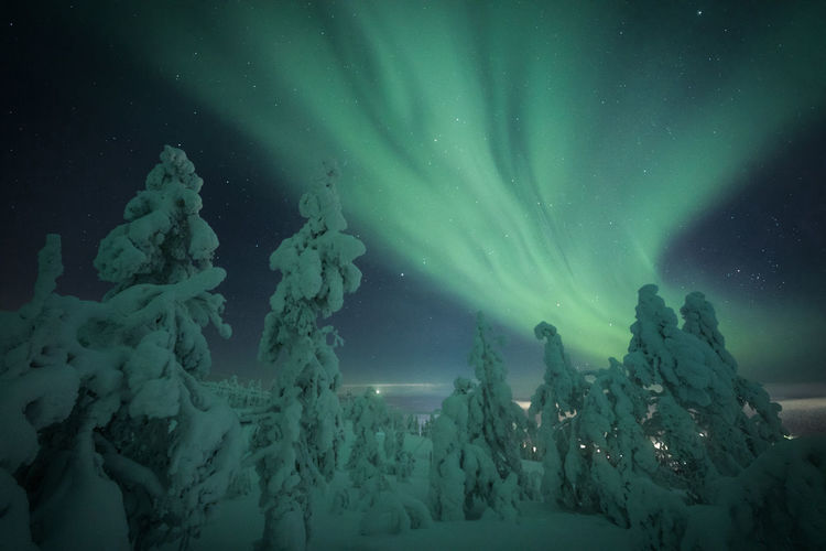 Snow Covered Trees Against Aurora Borealis At Night
