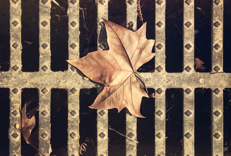 Wasted Autumn Close-up Day Fashion Leaf Maple Leaf Nature Outdoors Sewer Withered