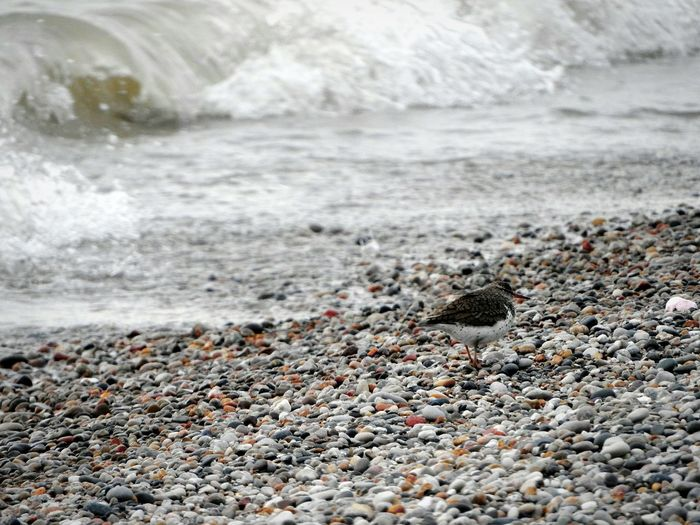 View of crab on beach