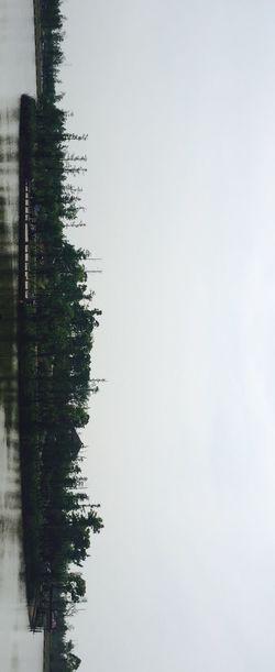 Lake Island Tree Taking Photos 😚