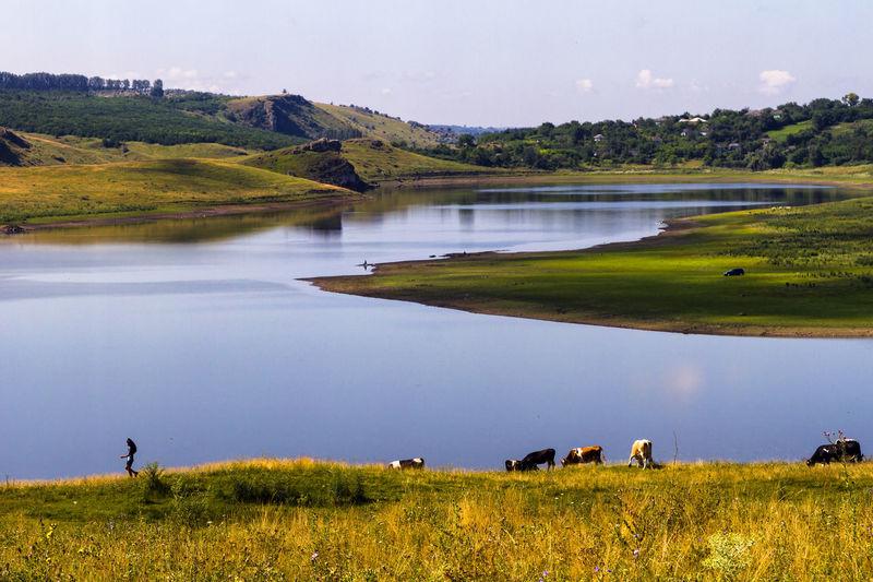 Idyllic rural scene in summer