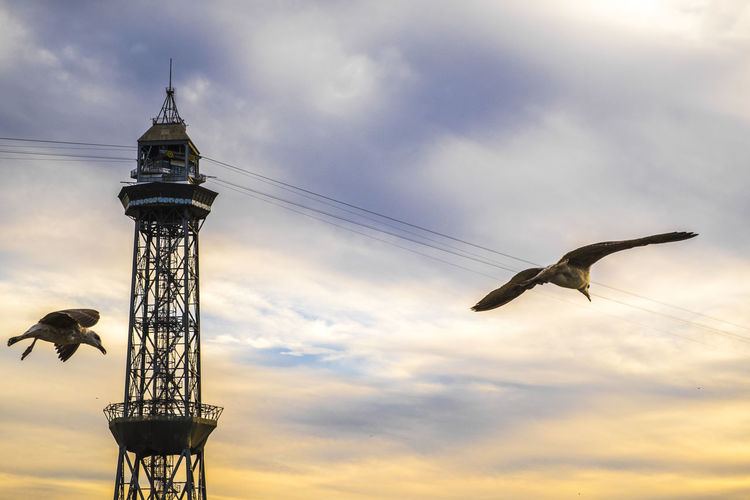 Low Angle View Of Seagulls Flying Against Overhead Cable Car Station