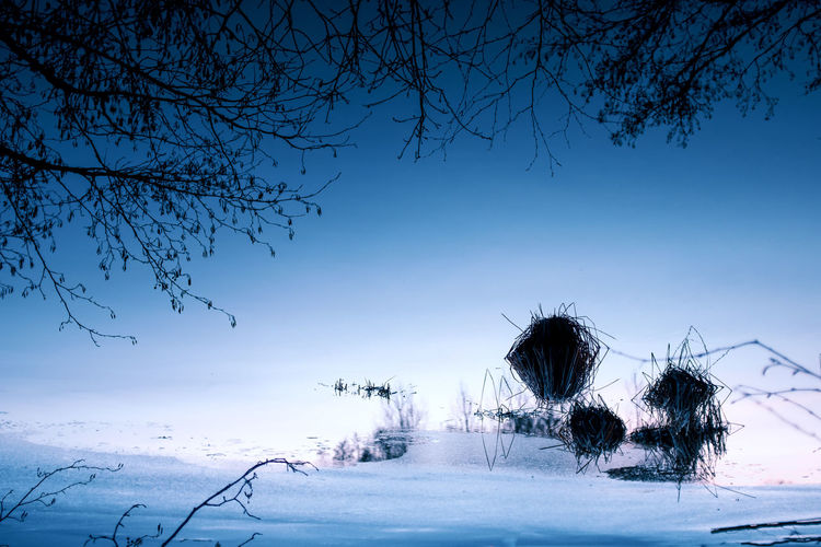 BABY, IT'S COLD OUTSIDE Nature No People Outdoors Winter Ice Frozen Cold Temperature Cold Blue Lake Tree Plant Snow Sky Branch Tranquility Bare Tree Beauty In Nature Environment Scenics - Nature Covering Tranquil Scene Landscape Land