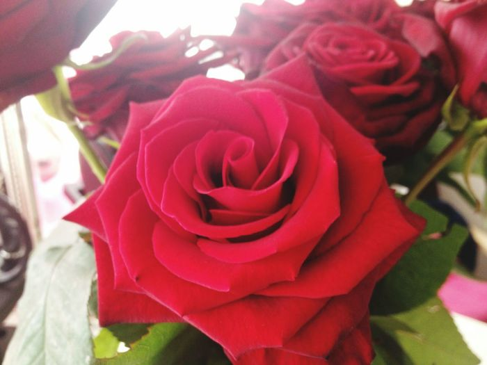 Rose🌹 Red Roses Valentine Simple Beauty Love❤