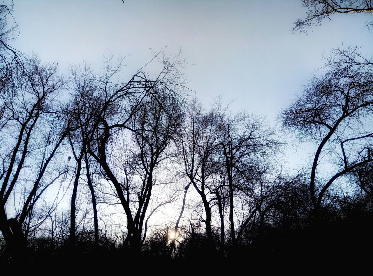 tree, silhouette, bare tree, no people, nature, sky, beauty in nature, low angle view, outdoors, forest, tranquility, day, scenics, clear sky, branch