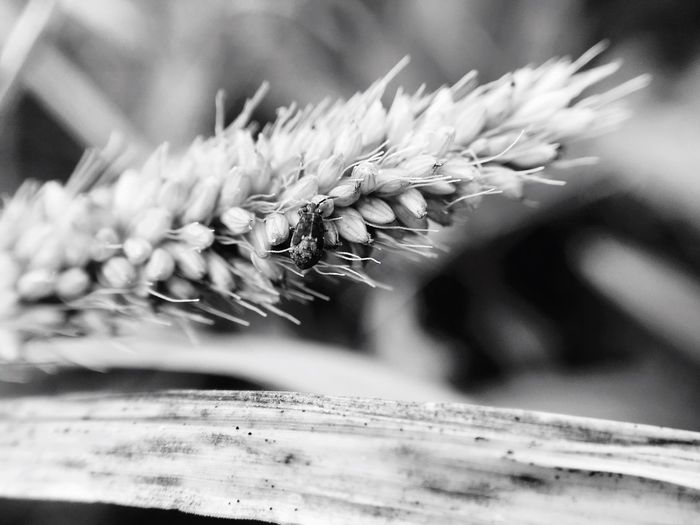Insect macro Nature Close-up Plant Flower No People Fragility Day Beauty In Nature Freshness Mobile Photography Extreme Close-up Outdoors Monochrome Photography Macro Photography Macro Maximum Closeness
