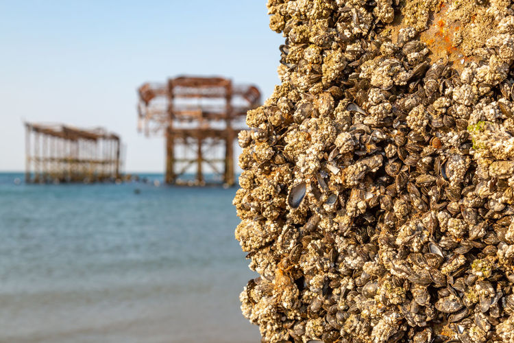 Barnacles on an old post from Brighton's West Pier, with the pier structure in the distance Barnacles Brighton Ruins Shallow Depth Of Field Architecture Beach Beauty In Nature Building Exterior Built Structure Close-up Day Focus On Foreground Land Nature No People Outdoors Rock Rock - Object Sea Sky Textured  Travel Destinations Water West Pier