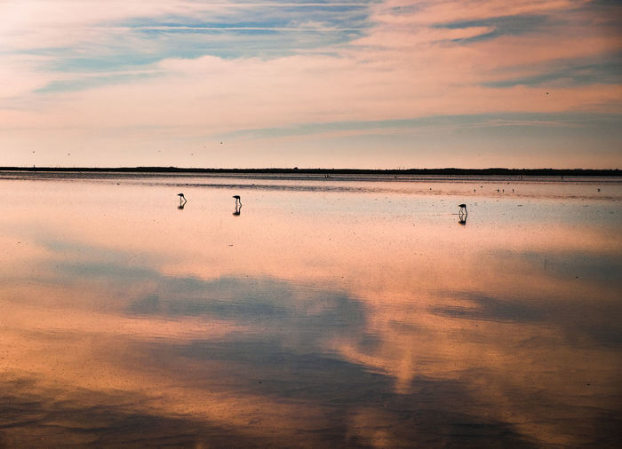 The beauty of minimalism at the sunset light Flamingo Sunset_collection Sunset Silhouettes Reflection_collection France Camargue Salt - Mineral Flamingo Water Bird Sunset Salt Basin Desert Lake Pink Color Backgrounds Salt Flat Salt Lake Reflection Lake Lagoon Romantic Sky Dramatic Landscape Capture Tomorrow
