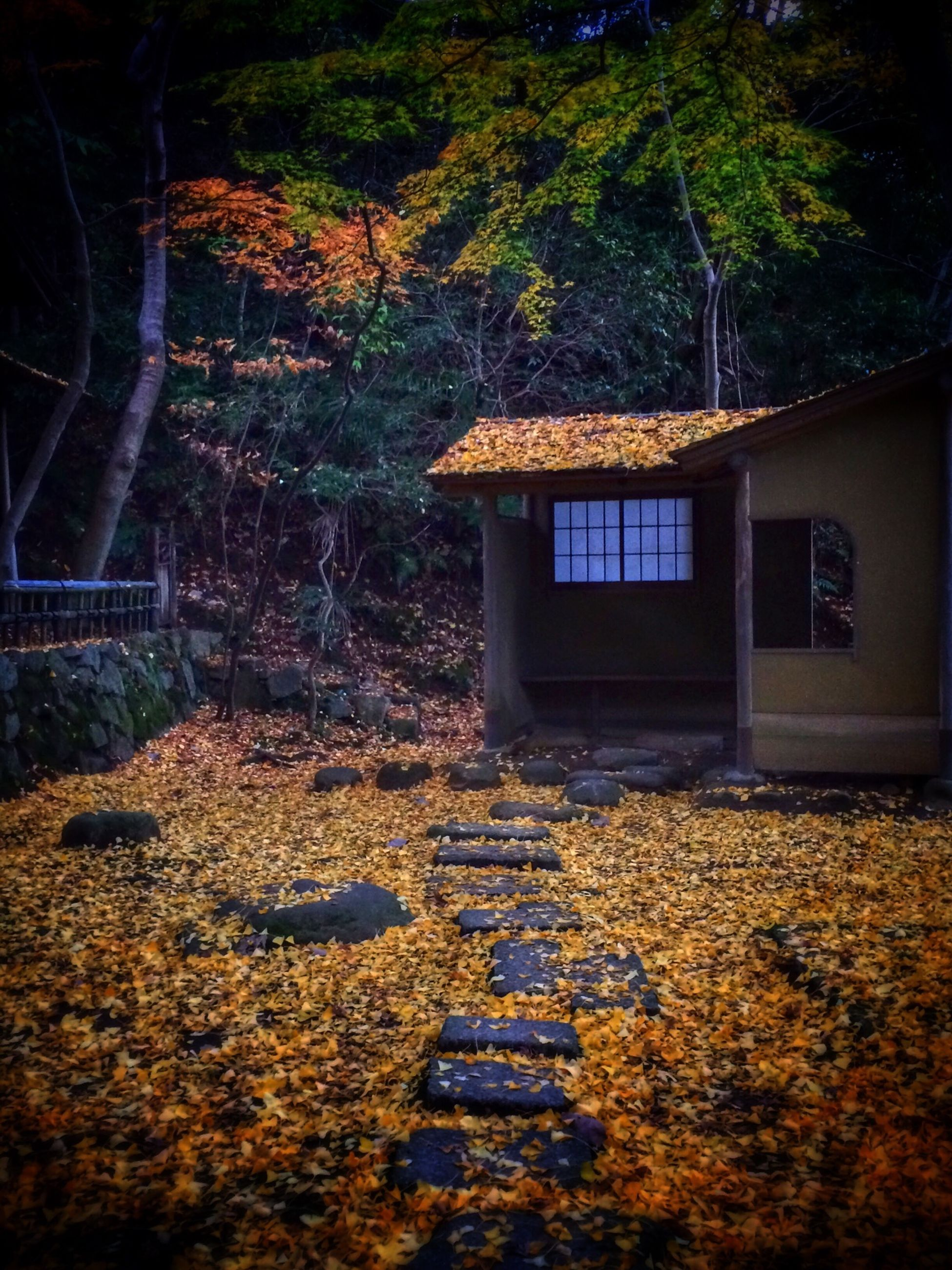 tree, built structure, architecture, building exterior, autumn, house, growth, change, plant, yellow, season, outdoors, nature, leaf, dry, day, no people, fallen, illuminated